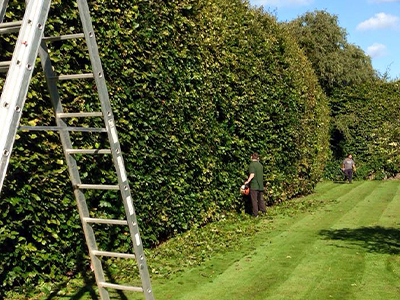 Hedge Trimming and Garden Maintenance Finchley
