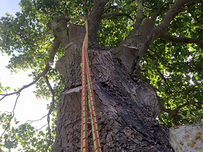 Stanmore emergency tree surgeon
